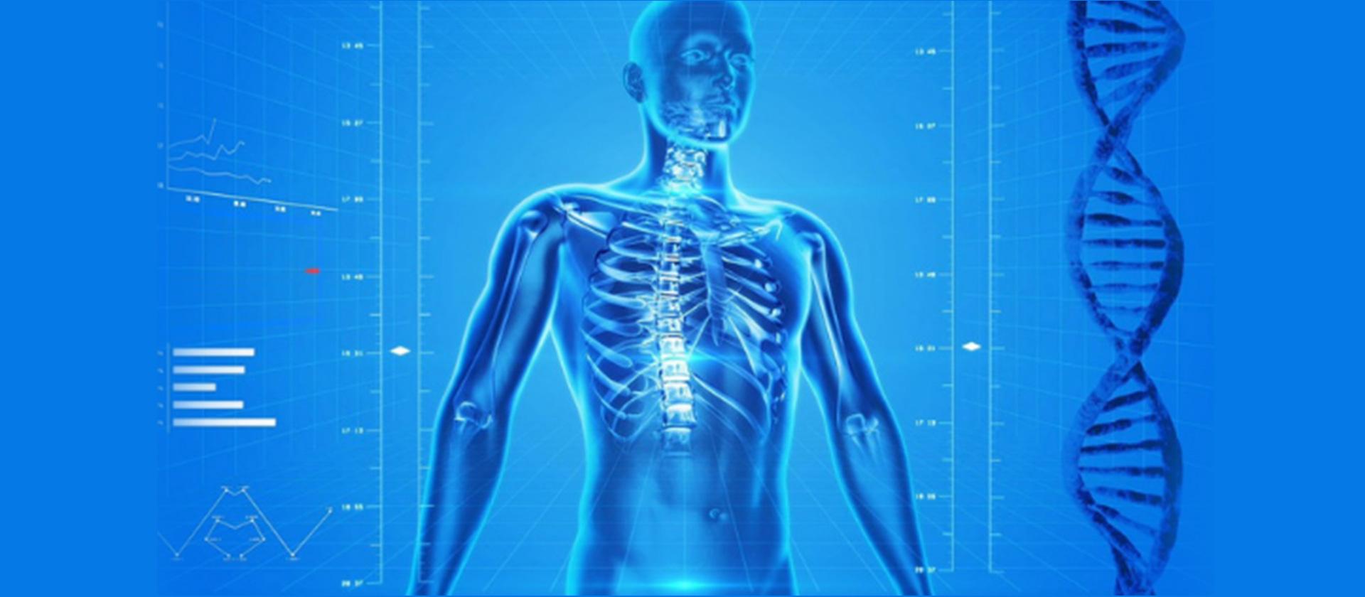 Human body DNA